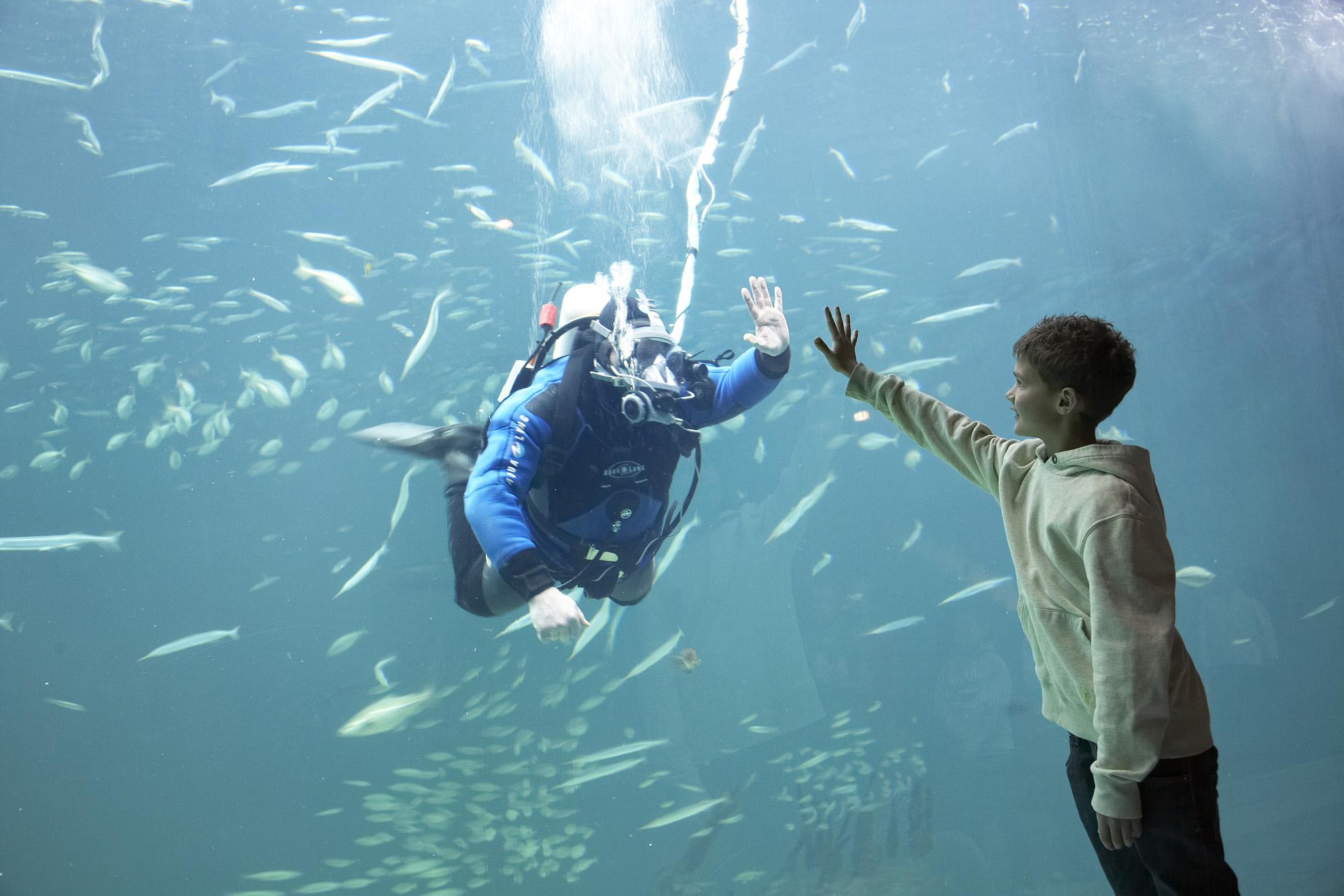 På nært hold. På Nordsøens Oceanarioum følger du livet under havet på nært hold. Og du kan se mens dykkere mater fiskene. Foto: Visit Denmark