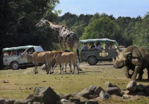 På nært hold: Her kommer man meget nær de eksotiske dyrene. Foto: Ree Park Safari