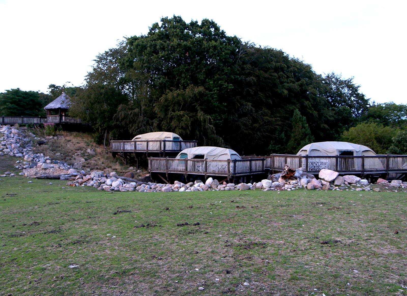 Overnatting: I disse teltene kan hele familien få en forglemmelig natt midt ute på savannen. Å høre ulvene ule i fjerne i nattemørket kan være litt skummelt, men samtidig fantastisk spennende. Foto: Fjord Line